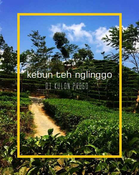 17 Tempat wisata di Yogyakarta Terpopuler - Kebun Teh Nglinggo
